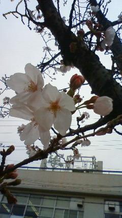春はもうすぐ!!