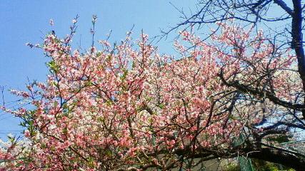 春まっしぐら